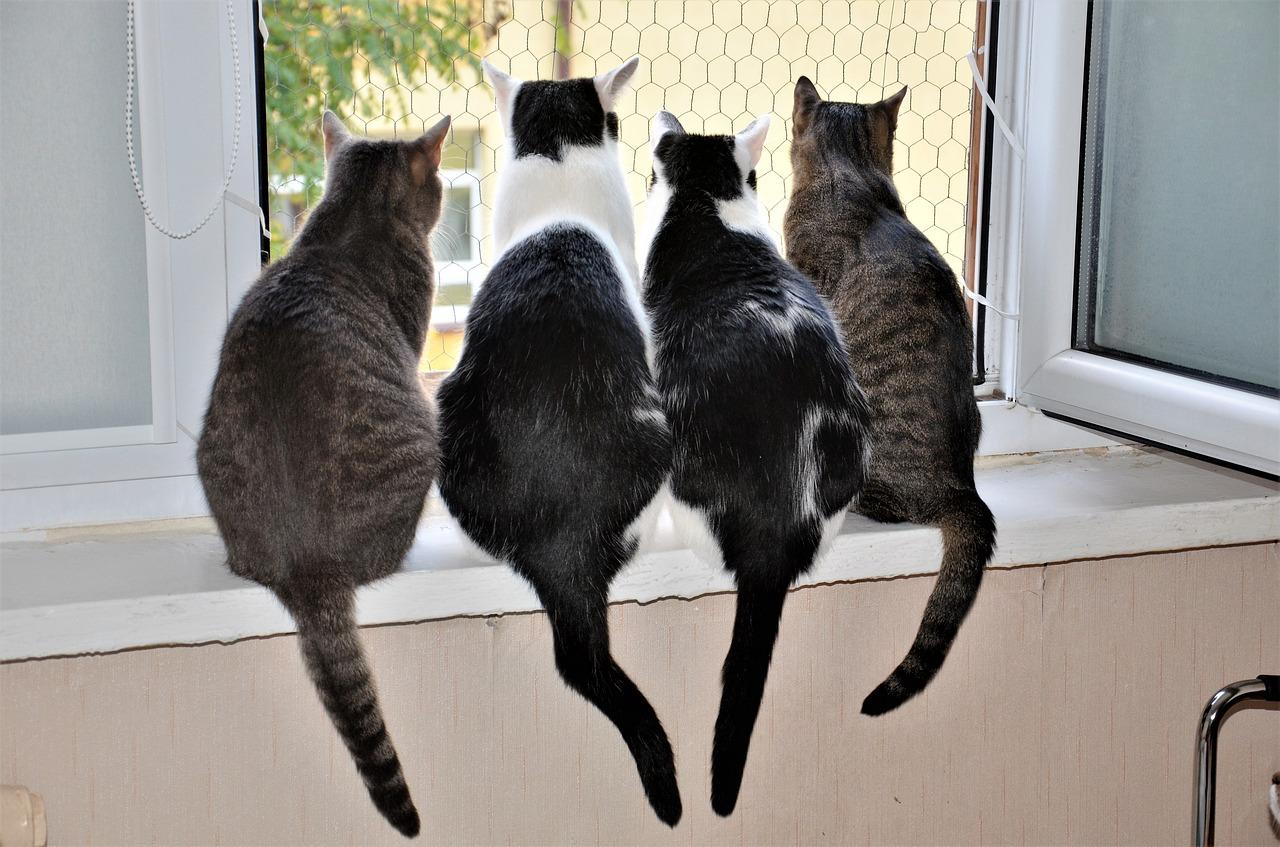 猫って一人ぼっちで大丈夫なの?多頭飼いの疑問