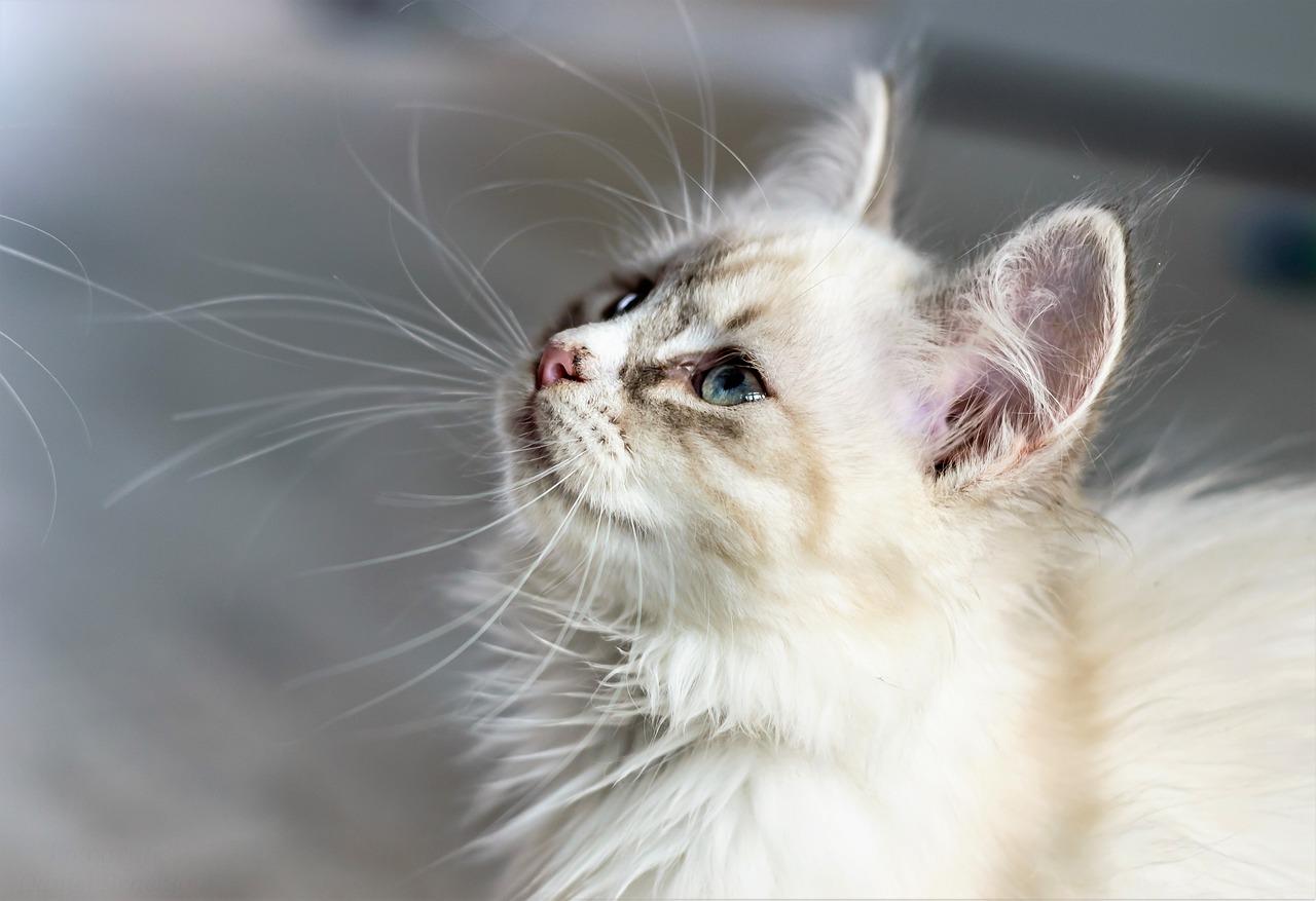 猫も「オナラ」をするの? かわいくて不思議な行動分析 Q & A