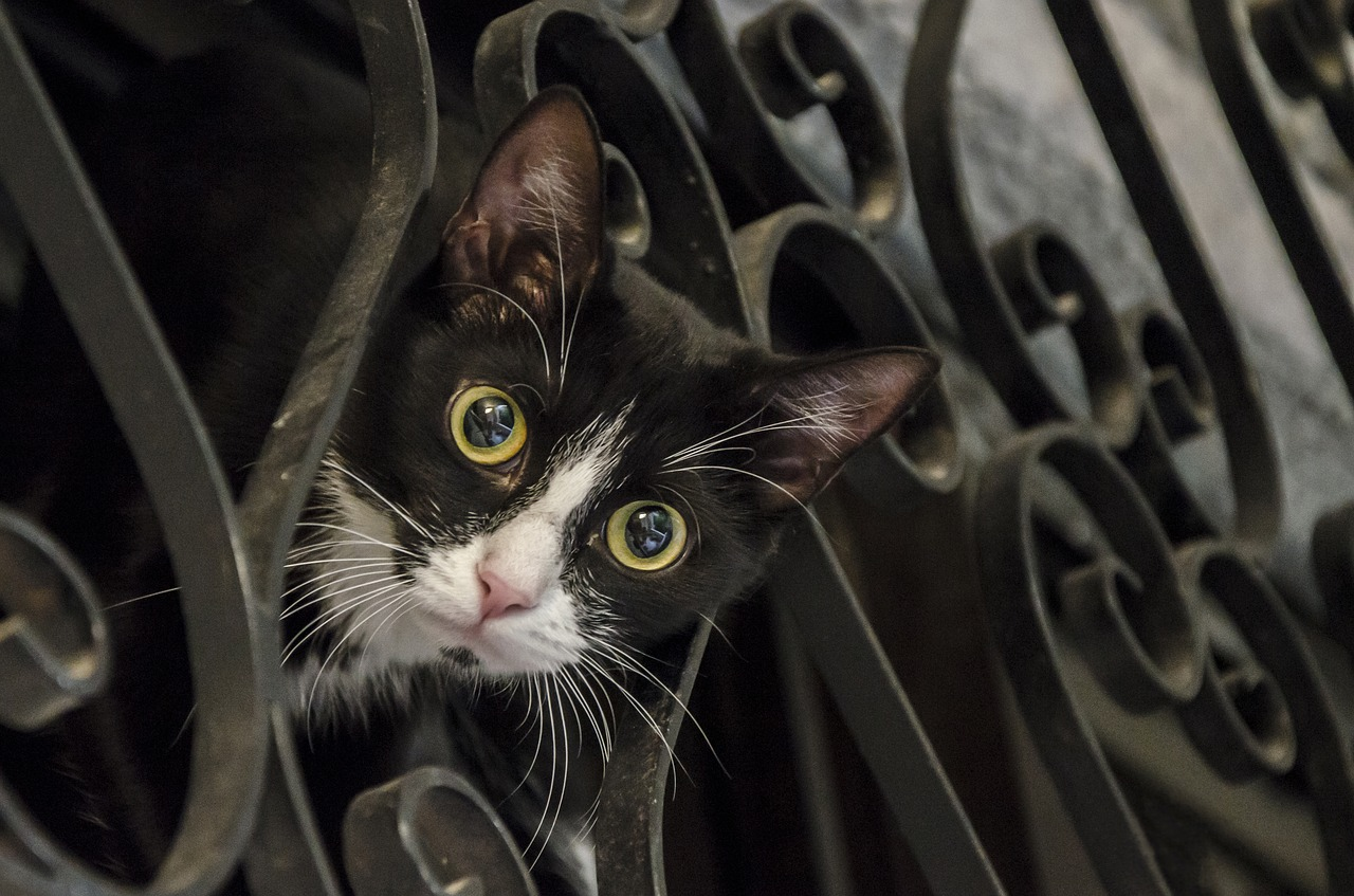 猫におやつって必要?「ちゅーる」にすごい反応するんですけど!ちゃんと考えてあげよう!