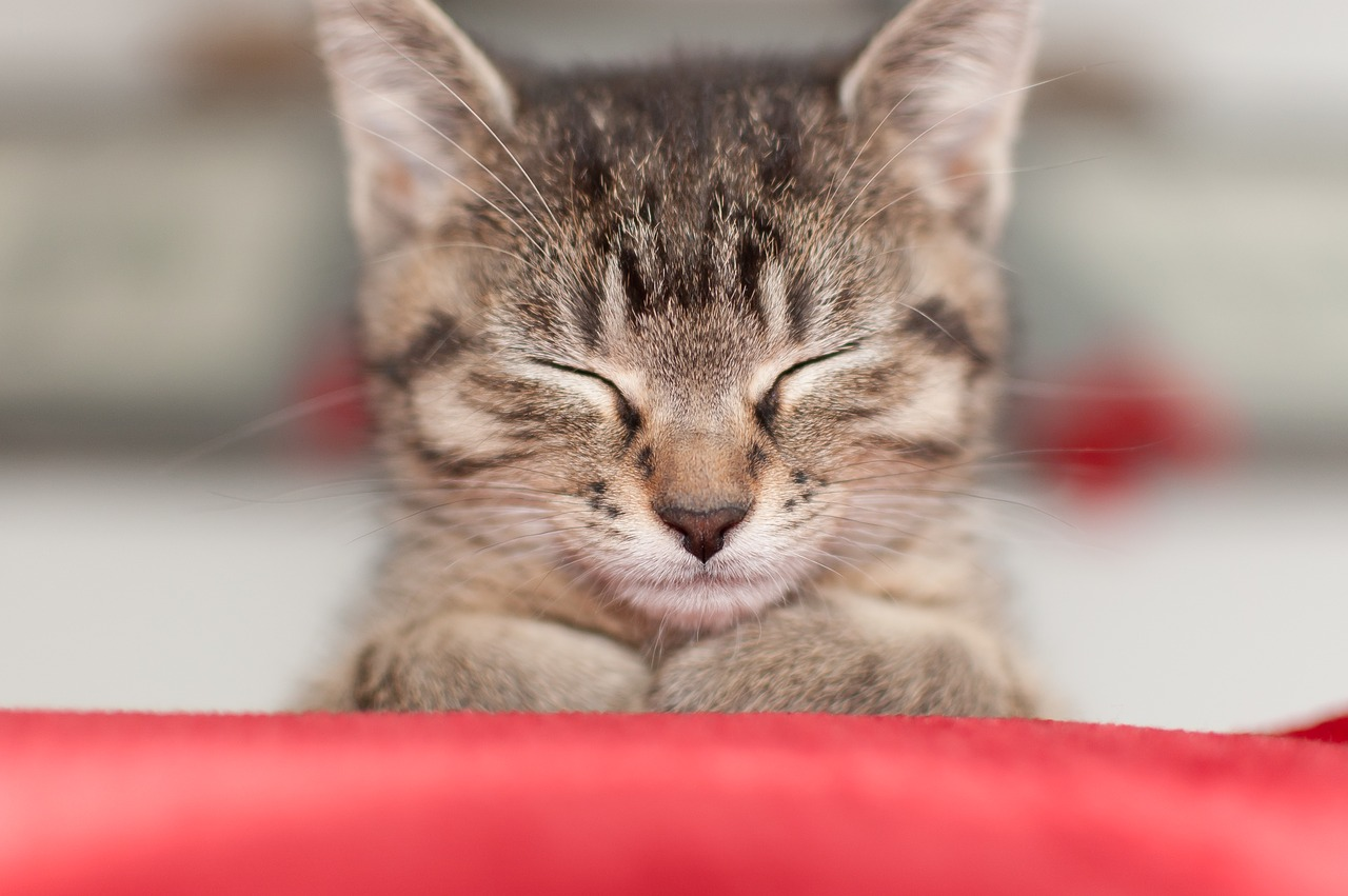 衝撃かも!「猫に好かれる人」「嫌われる人」の違いは?あなたは大丈夫?