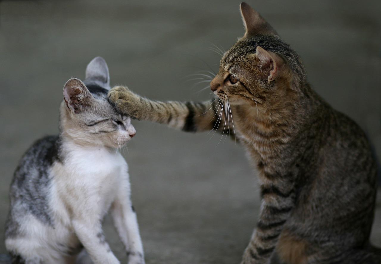 猫を怒るのはダメ?って聞くけど本当なの?【しつけ編】