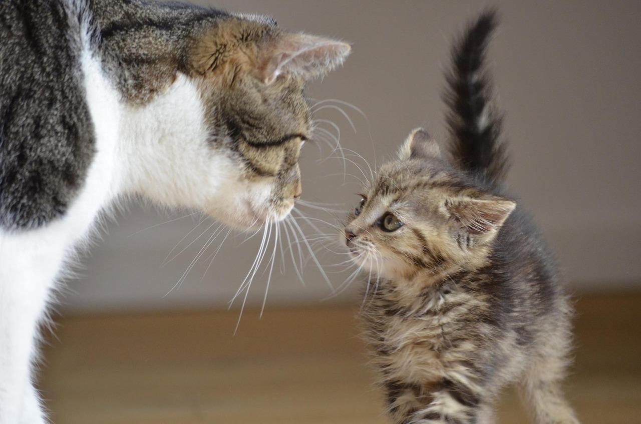 猫ちゃんの「噛み癖」ってどうにかならないの?私傷だらけ!