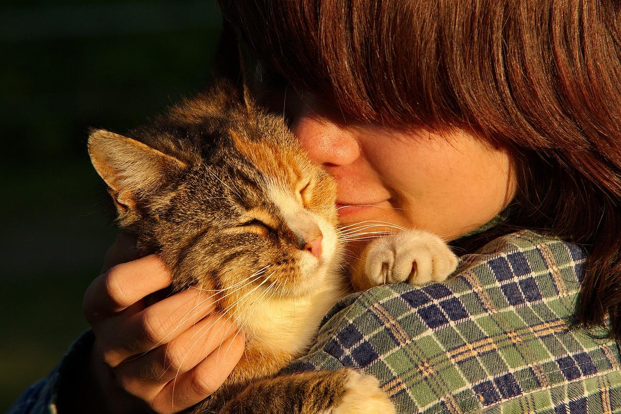 猫ちゃんの「愛情表現」「しっぽのサイン」を知るともっと「かわいい〜」って思いますよ。
