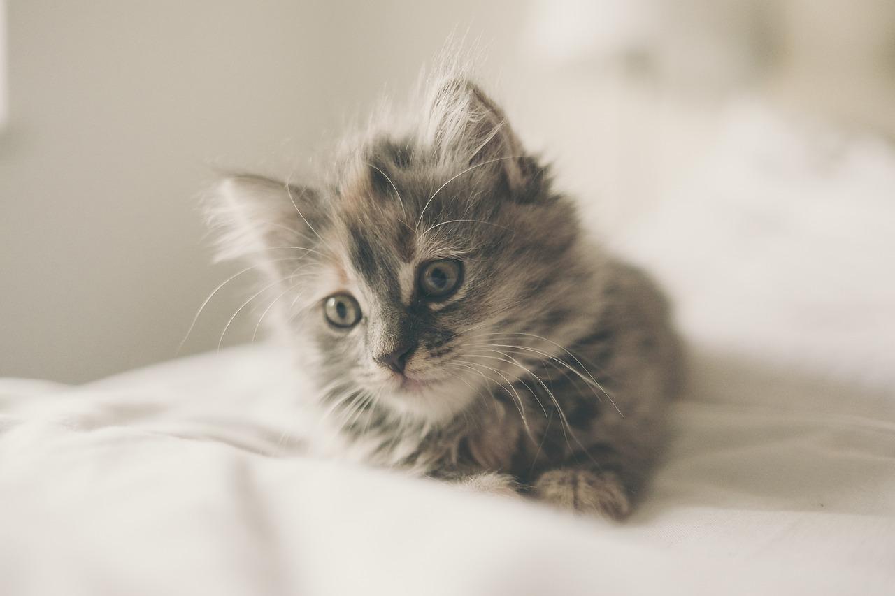 愛猫のお留守番 何日なら大丈夫?「カリカリマシーン」ってどうなの?