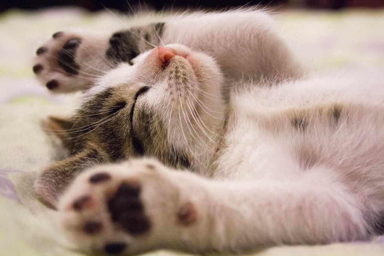 猫が「ゴロゴロ」言ったりするのはなんで?【猫の気持ち】