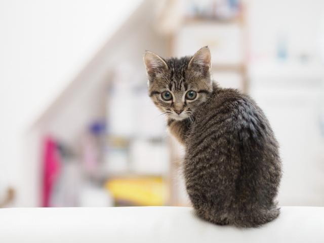 猫のルーツを知ろう!!いつからどのようにして始まった? 十二支に猫がいないのはなぜ!